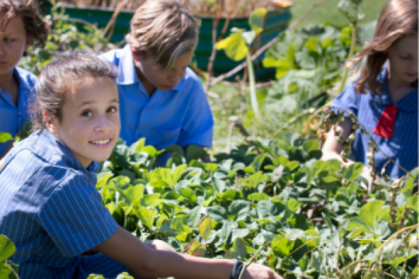 Key 'Green Dates' for Schools in 2020