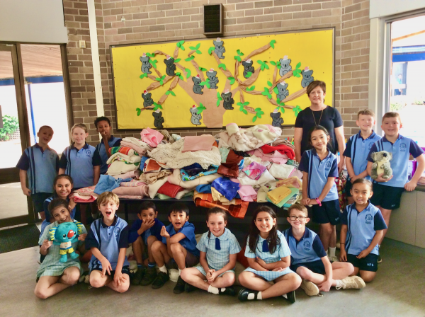 Holy Family Ingleburn rallies to support koala conservation after devastating bushfire losses